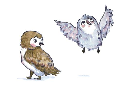 Owl Spot1