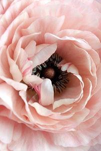 janine-joles-flower.jpg