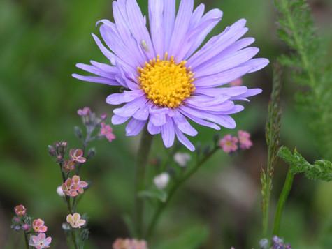 Фиолетовая «фея»
