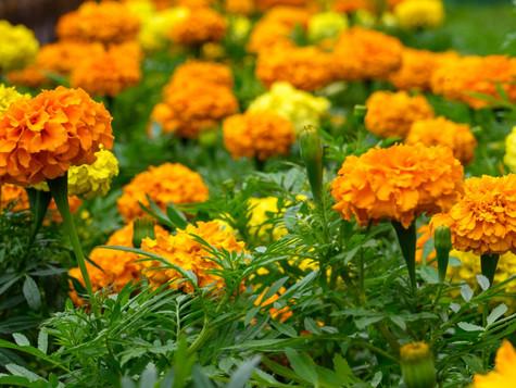 Солнечные цветы лета