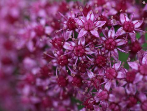 Уникальная коллекция: цветок-звёздочка