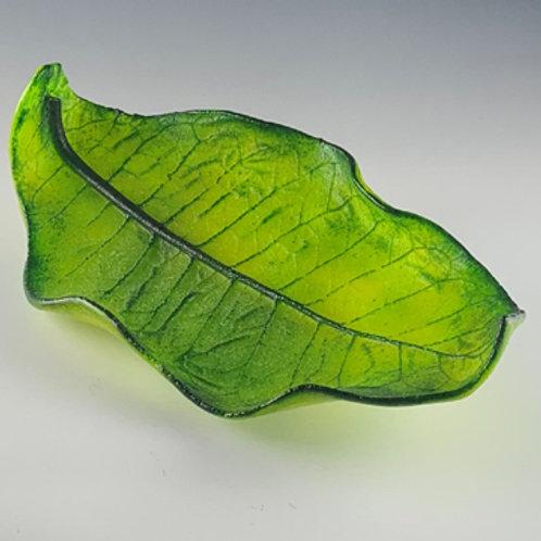 medium Tobacco leaf