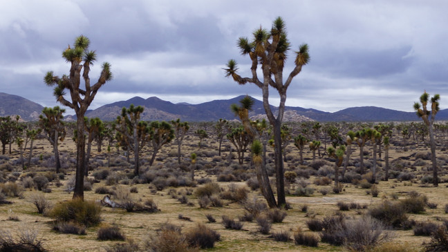 JOSHUA TREE ROAD TRIP