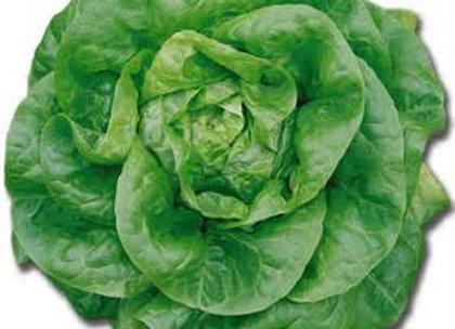 Hydroponic Lettuce-2 heads