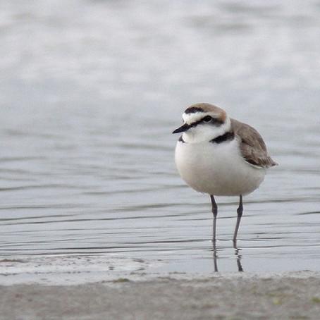 Le confinement n'a pas eu beaucoup d'effet sur les oiseaux d'eaux.