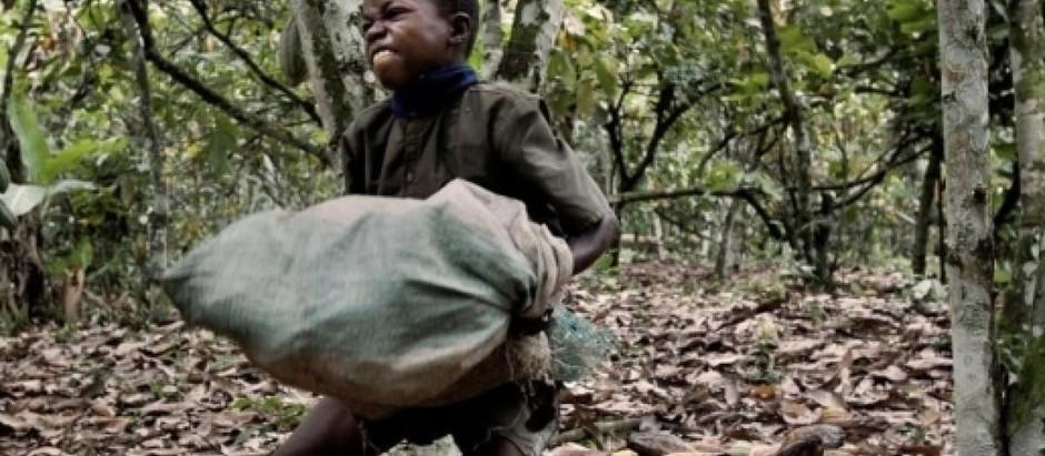 L'innocence exploitée (3) : les enfants esclaves du cacao en Côte d'Ivoire.