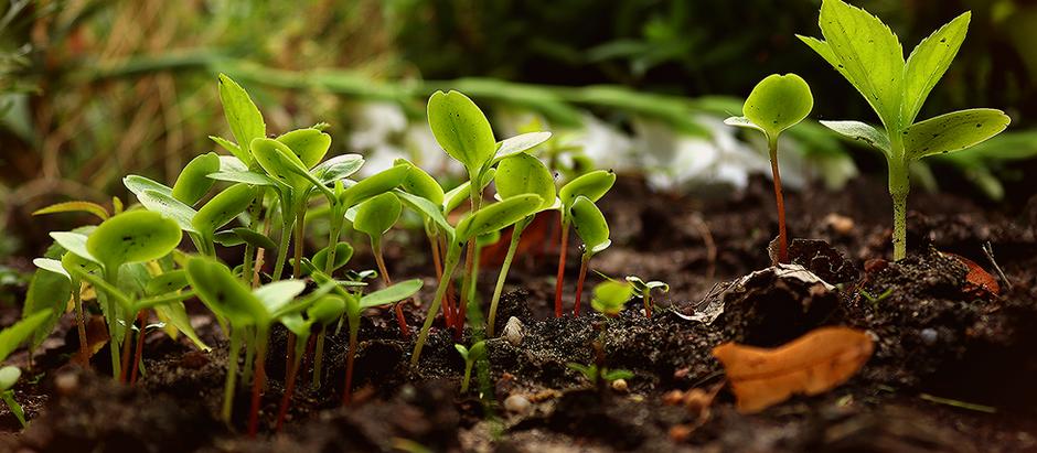 La permaculture : une solution durable pour une partie des maux de la société ?
