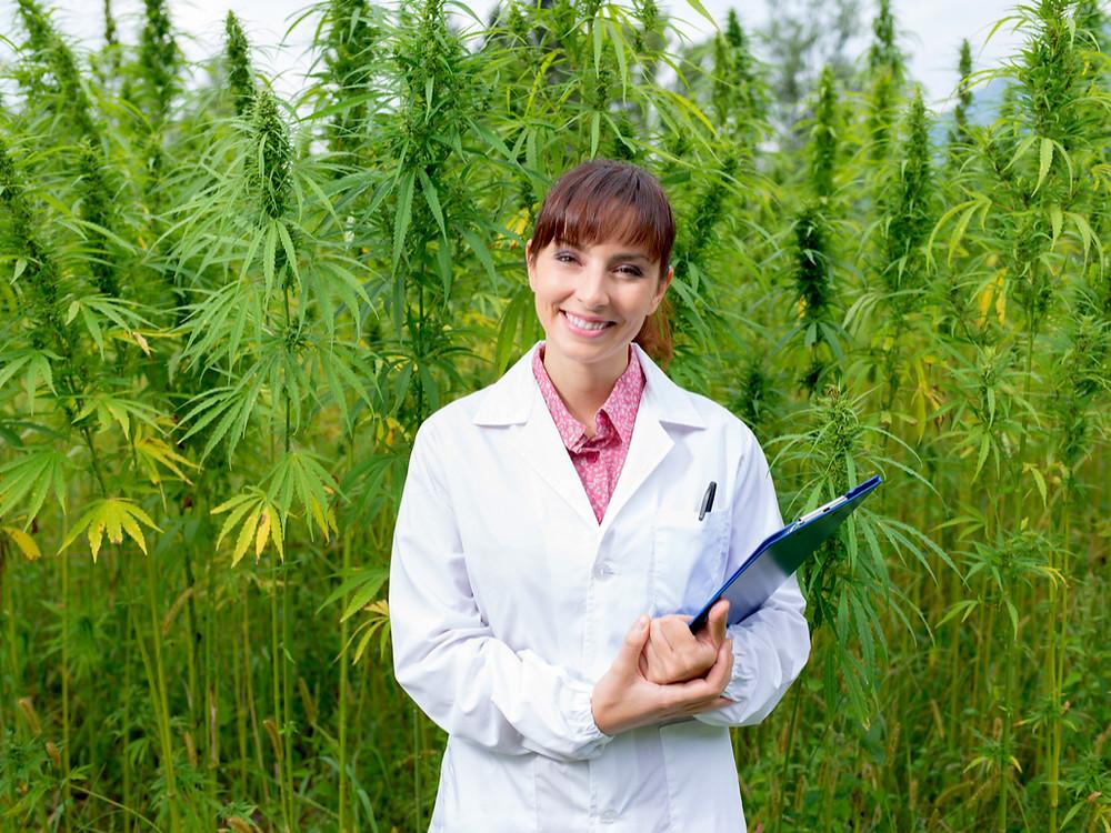 Marijuana card and cannabis certification.  Ready to harvest marijuana in Arkansas.