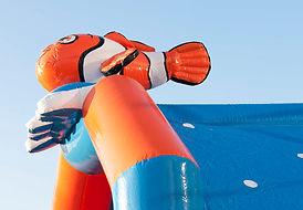 Multifun Clownvis (3).jpg
