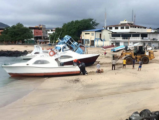 Protection and restoration of Playa los Marinos on San Cristobal Island - Galapagos.