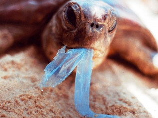 Galapagos: Doing Great Combatting Trash and Pollution… but Could Do Better