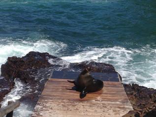 Turismo en Galápagos : Recomendaciones para su mejoría.