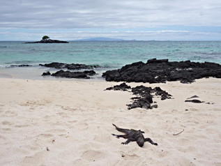 Improving tourist services in Galapagos