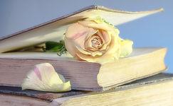 rose-2101475_1920.jpg