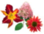 lilly-hydrangea-echinacea.jpg