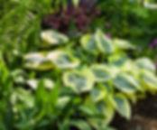 autumnfrost-580px.jpg