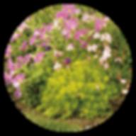 lemoncoral-landscape-crcl.png