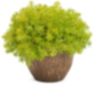 lemon_coral_mono-320px.jpg