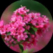 flower-closeup-circle.png