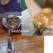 CheetarahAndTygra7.JPG