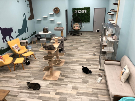 Cats, cuddles and caffeine comes to new Loudoun County cafe