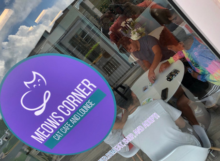New Cat Cafe Opens in Loudoun County