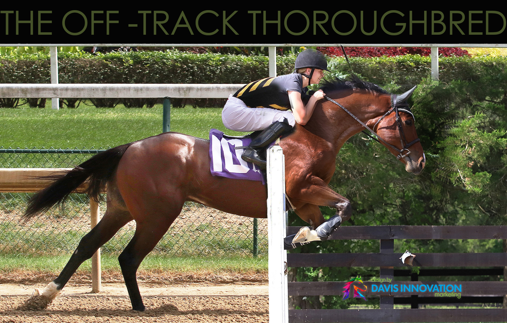 Thoroughbred Adoption