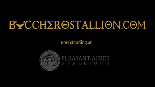 Bucchero Stallion Video for Ironhorse Racing