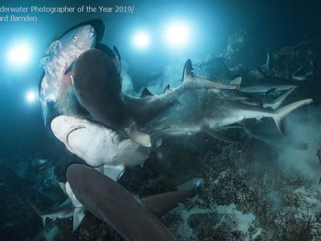 Оголошені призери конкурсу підводний фотограф року 2019