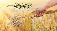 一粒麥子  A kernel of wheat
