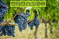葡萄園主的秘密 - The secret of the vineyard owner