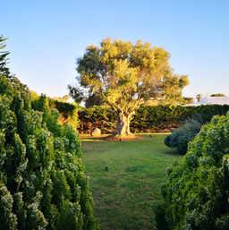 Un espace plein de végétation