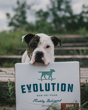 Brown and White Big Dog Posing With Dog Food in Saskatoon
