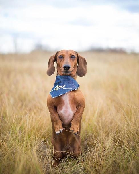 Slink doggy dog #saskatoonpetphotographe