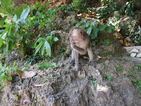 Uluwatu, Bali Travel Guide Pt 2
