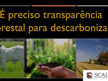 É preciso transparência florestal para descarbonizar