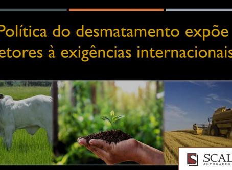 Política do desmatamento expõe setores à exigências internacionais