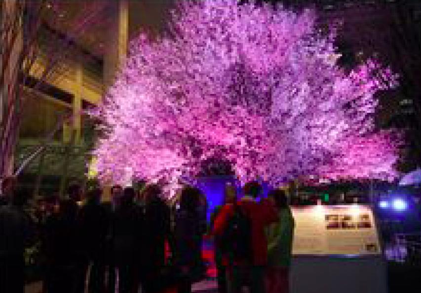 桜ライトアップ