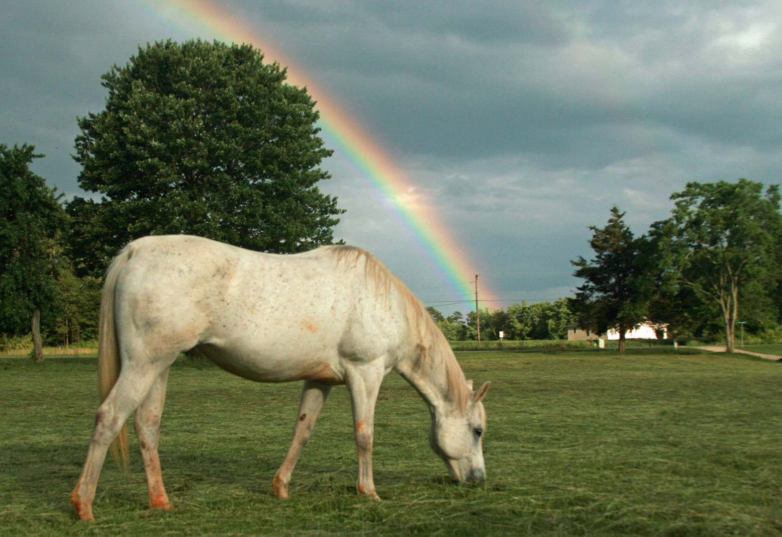 rainbow miakoda.jpg