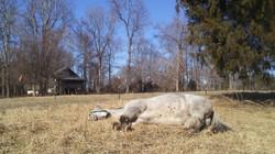 pearl sleeping