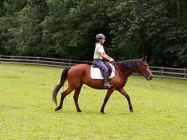 Stacey Carter of Heart Centered Horseman