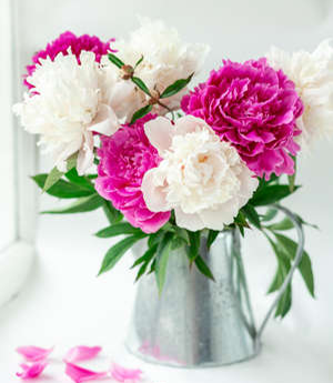 Peonies in Watering Can
