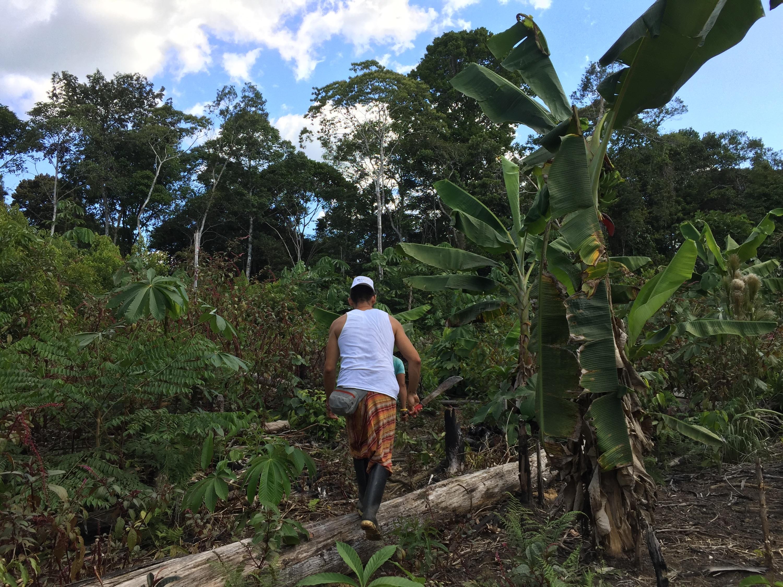 Getting Lost in the Jungle