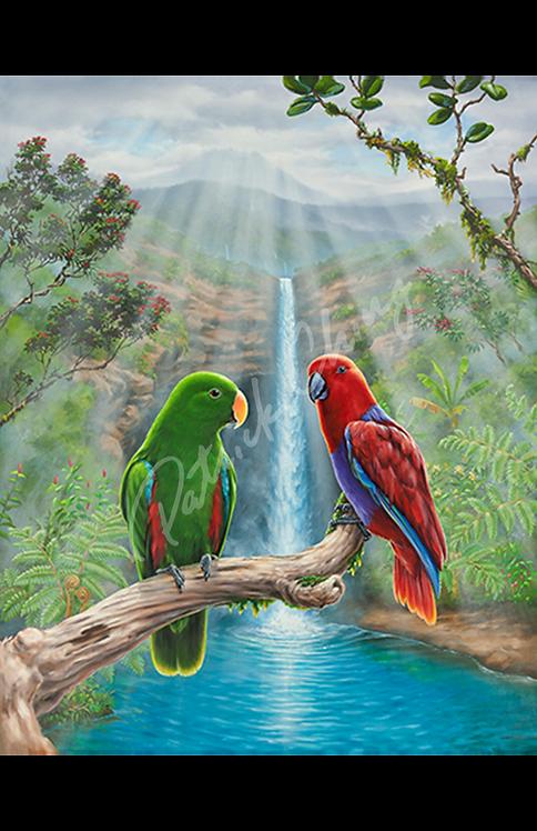 Eclectus Falls