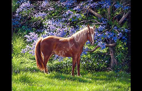 Jacaranda Horse