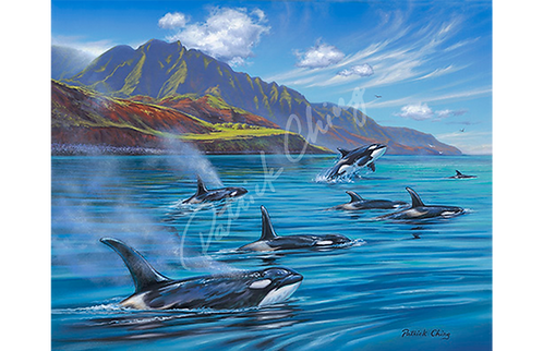 Orcas In Paradise