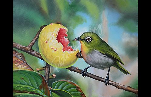 Guava Majiro