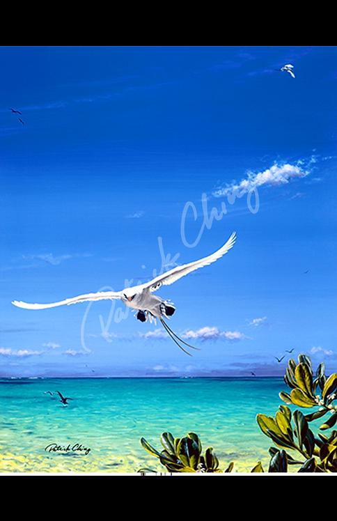 Tropic Bird
