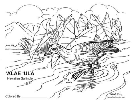 ʻAlae ʻUla