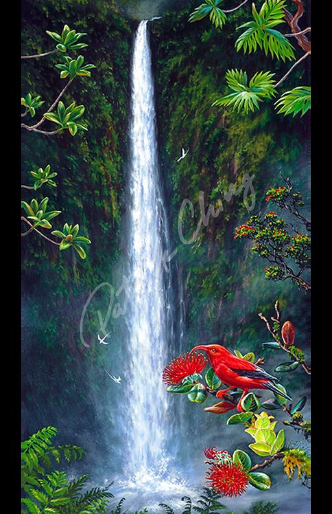 Akaka Falls ʻIʻiwi